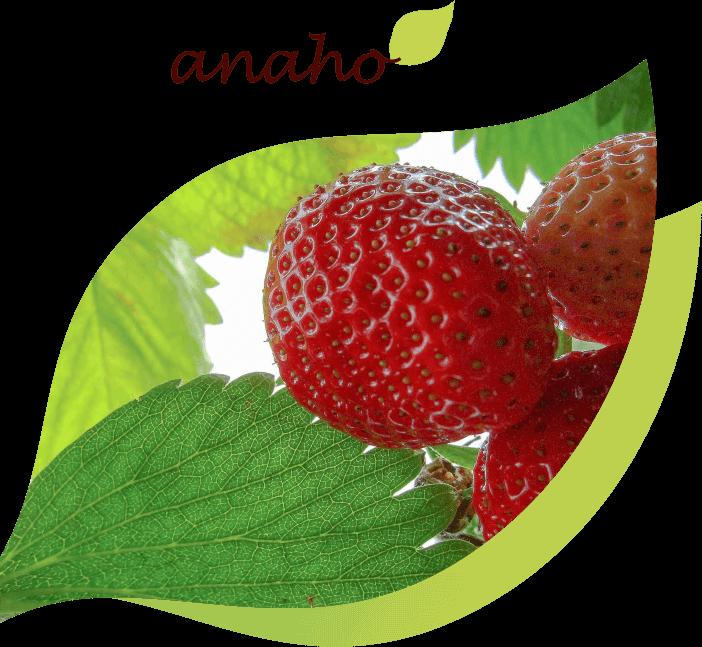 Anaho